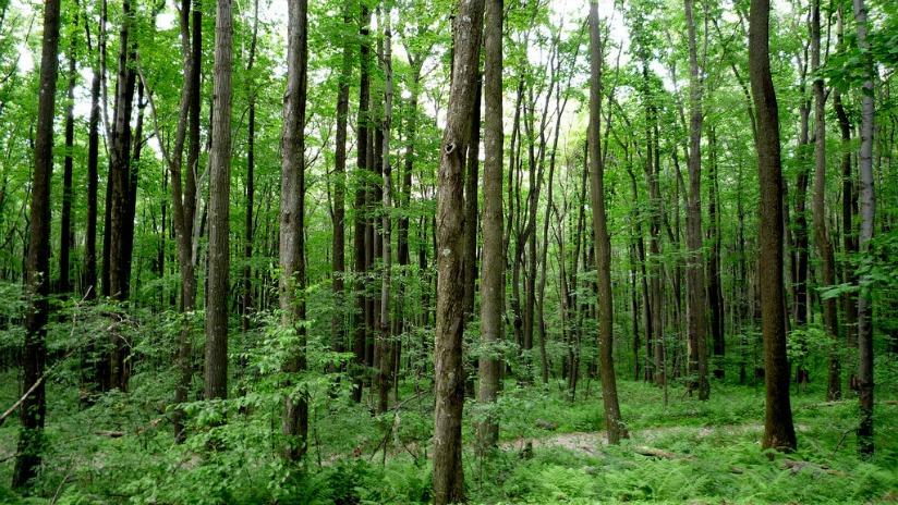 bosques lucio cabañas