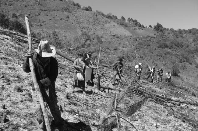cultivo siembra indigena mexico