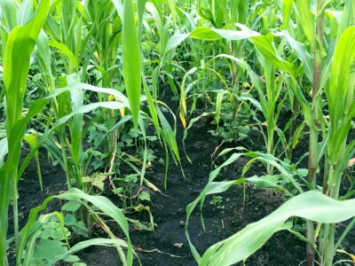 milpa-mexico-cultivo-siembra