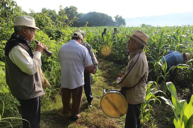 milpa-musicos-fiesta-ritual-mexico