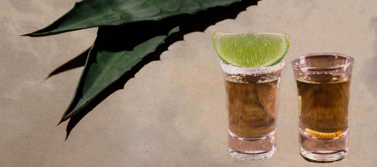 tequila, mezcal, diferencias