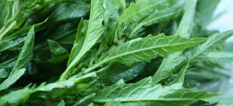 Epazote especias mexicanas saborizante