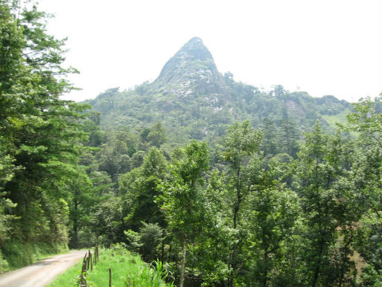 Guevea de Humboldt ecoturismo istmo
