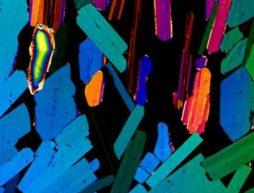 Tequila imagenes microscopicas