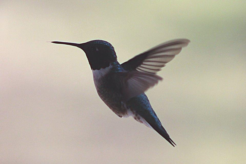colibri mexico