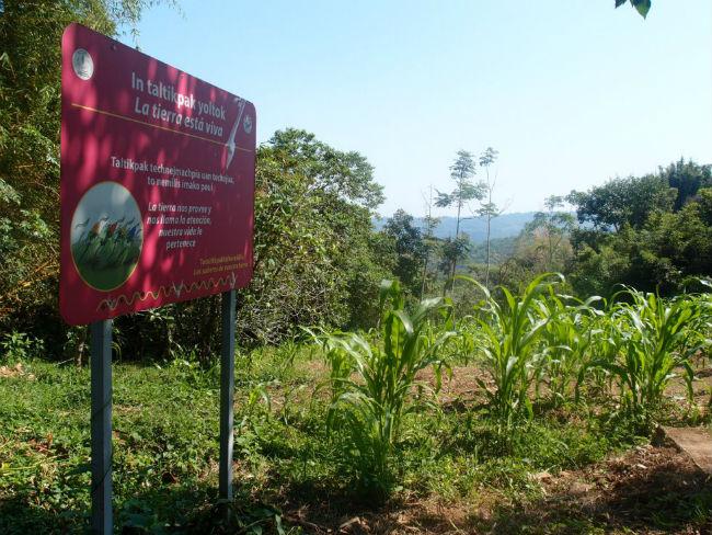 escuela indigena San Miguel Tzinacapan premios mexico