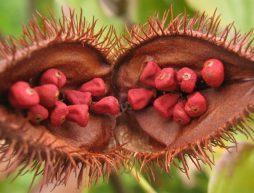especias mexicanas achiote