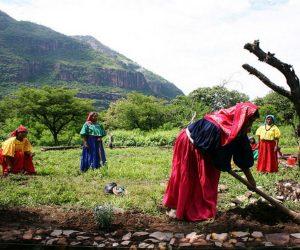 diversidad cultural biologica mexico ecosistemas