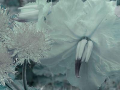 plantas medicinales, naturaleza, remedios naturales