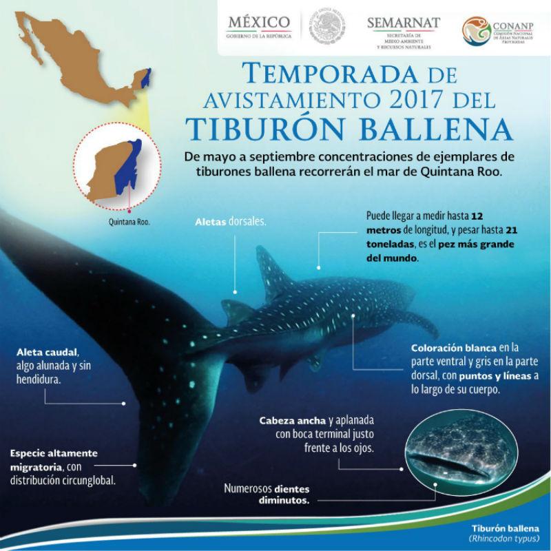 temporada avistamiento tiburon ballena mexico