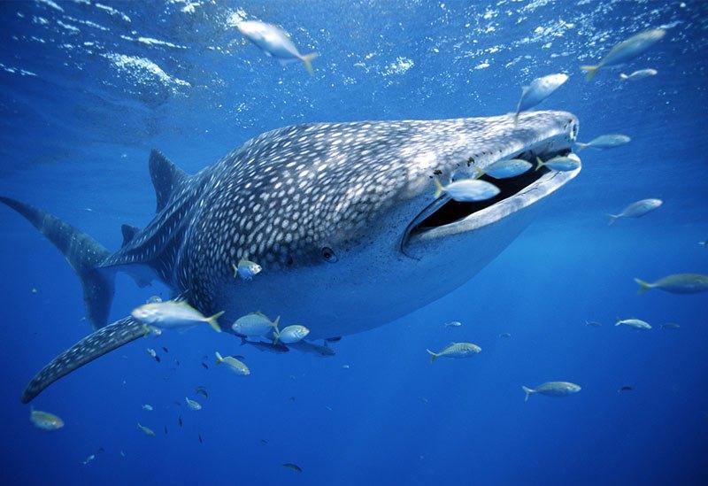 tour-tiburon-ballena mexico