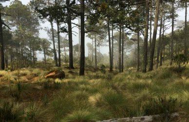 Comunidad-mexicana-que-vive-de-restaurar-un-gran-bosque-cofre-de-perote-veracruz-restauracion-forestal-mexico-0