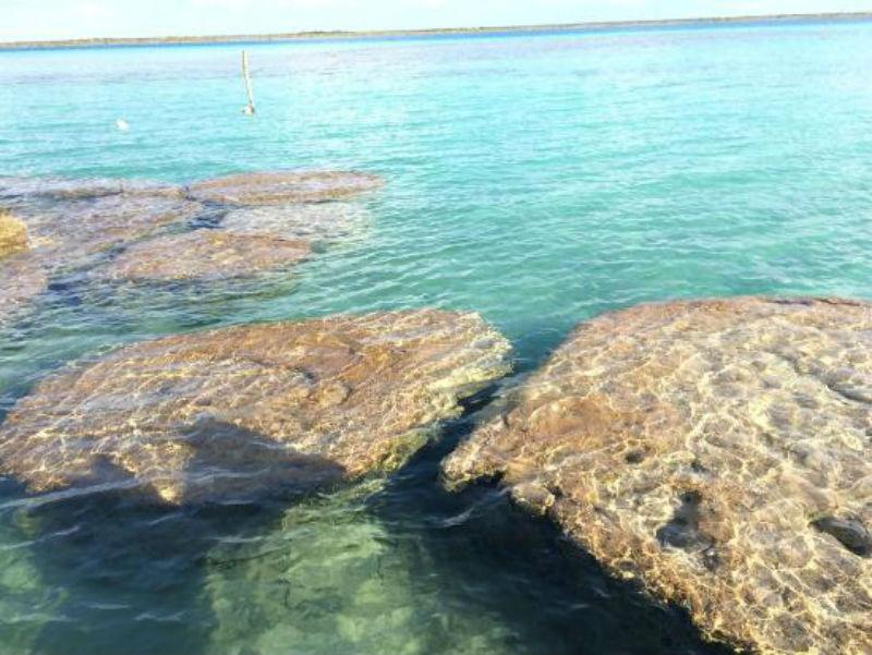 bacalar estromatolitos