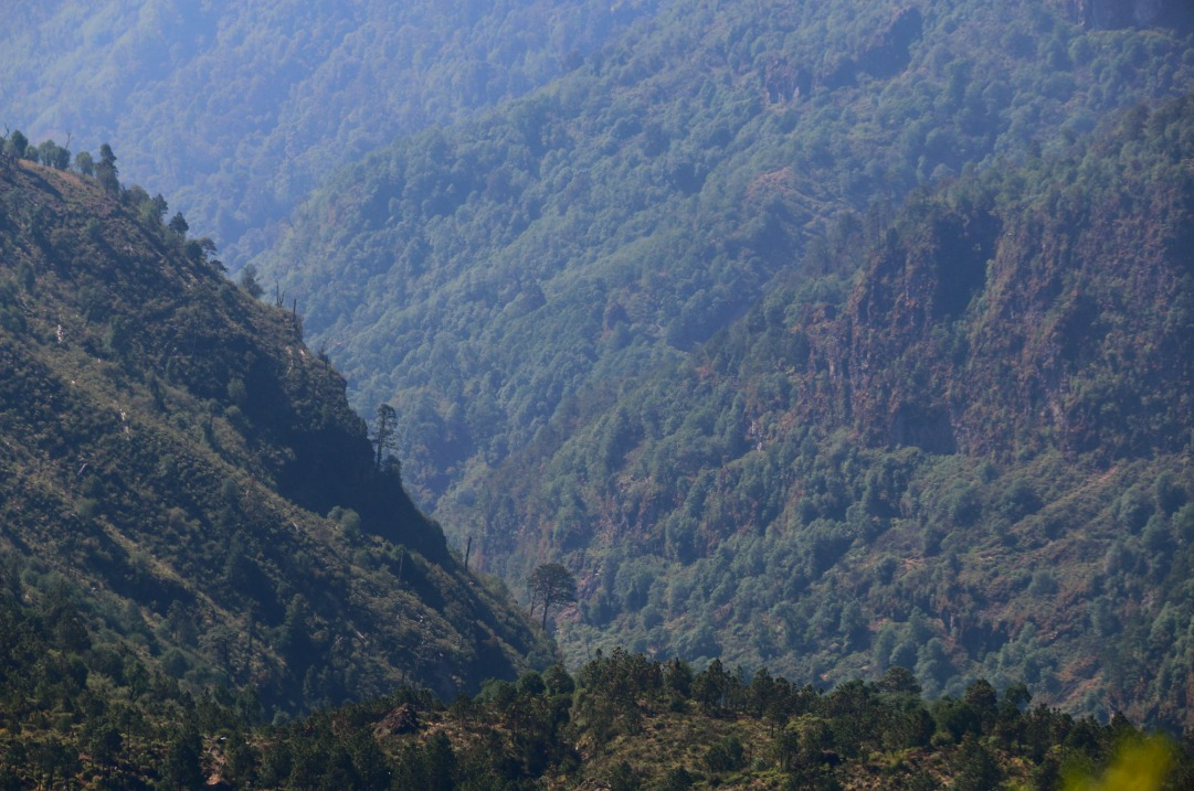 cofre de perote bosques veracruz mexico-3