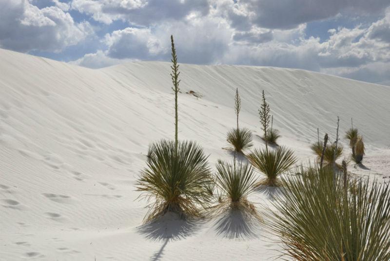 dunas yeso coahuila desierto blanco