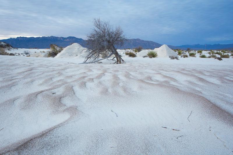 dunas yeso desierto blanco coahuila