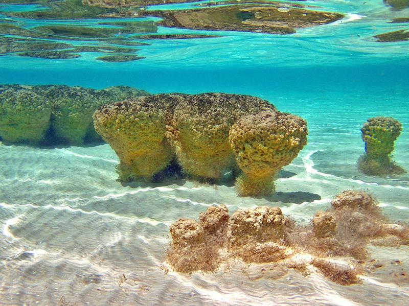 estromatolitos bacalar