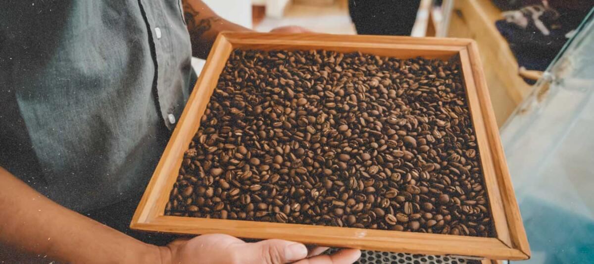 Cacao mexicano, alimentos y bebidas de Mexico, pueblos indigenas