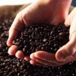 ¿Por qué el café mexicano está enamorando a México y al mundo?