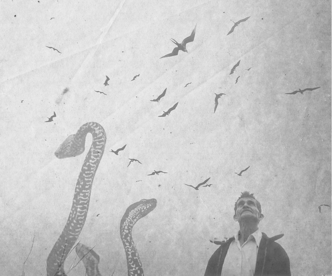 collage-serpiente-sueño