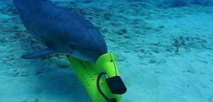 delfines salvaran vaquita marina mexico