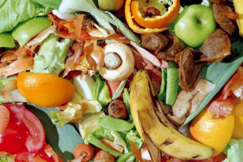 robin food rescata comida