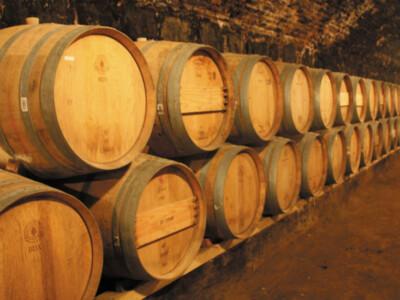 vinos mexicanos ganadores mundial de vinos