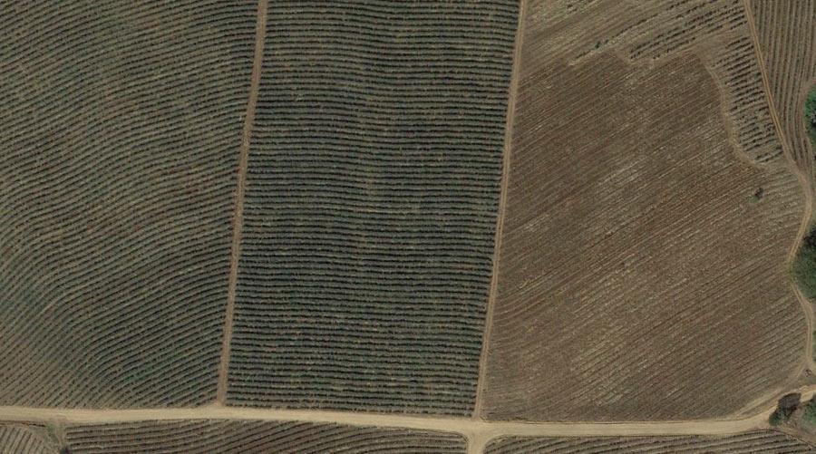 campos-agave-amatitlan-jalisco-satelite