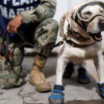 Frida, la perrita rescatista que se ha ganado nuestro corazón (Foto: Reuters)