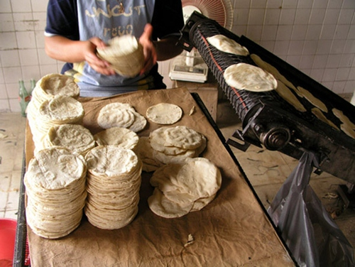 tortilleria-tortilla
