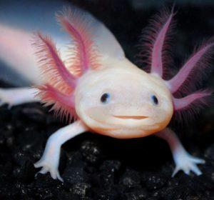 test-personalidad-especies-endemicas-animales