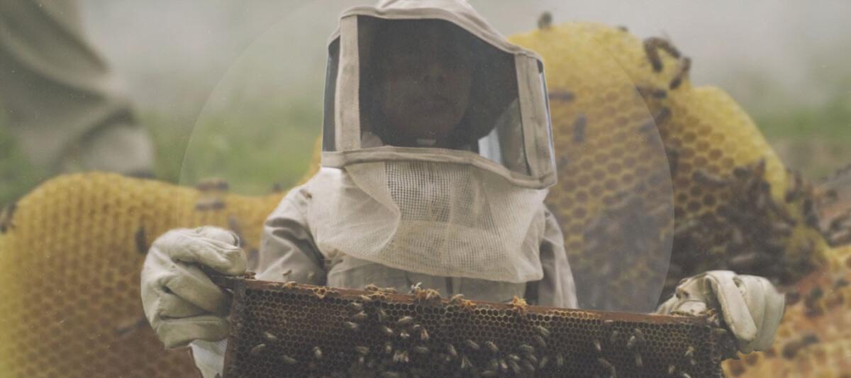 abejas mexicanas, estudiantes apicultores, miel mexicana