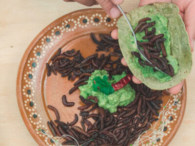 insectos comestibles, festival gastronomico, insectos mexicanos
