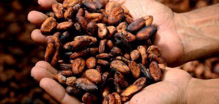 chocolate-mexicano-desapareciendo-documental-cacao-beneficios-sagrado