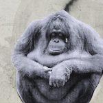 mexico-animales-especies-peligro-extincion-amenazados-mexicanos-endemicos-arte-graffiti-callejero