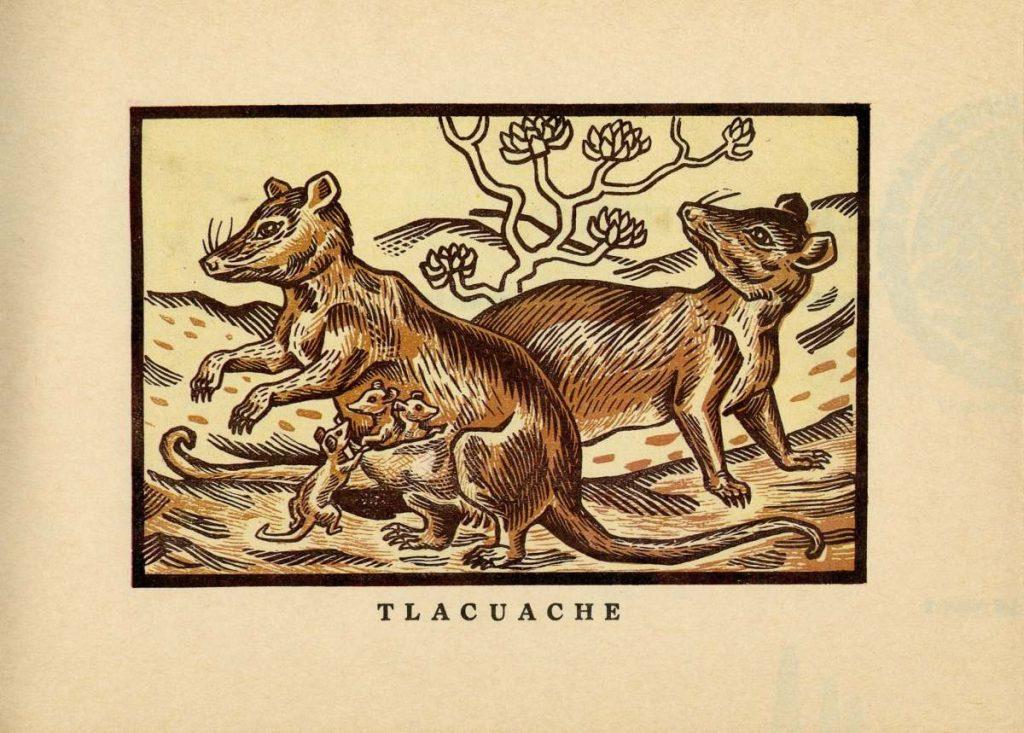 album-animales-mexicanos-fernandez-ledesma-endemicos-nombres-indigenas