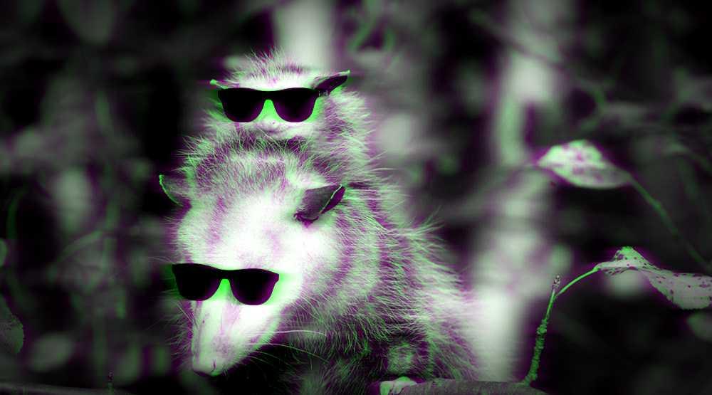 tlacuaches-animales-mexicanos-peligro-extincion-datos-informacion