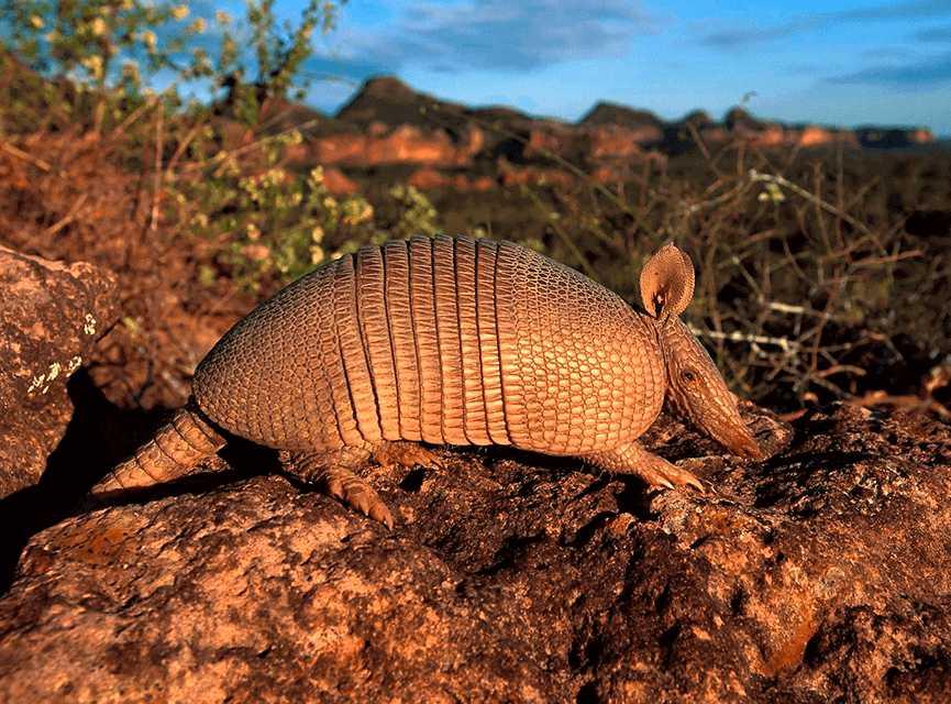 animales-raros-criaturas-endemicas-bestiario-mexicano-peligro-exitncion