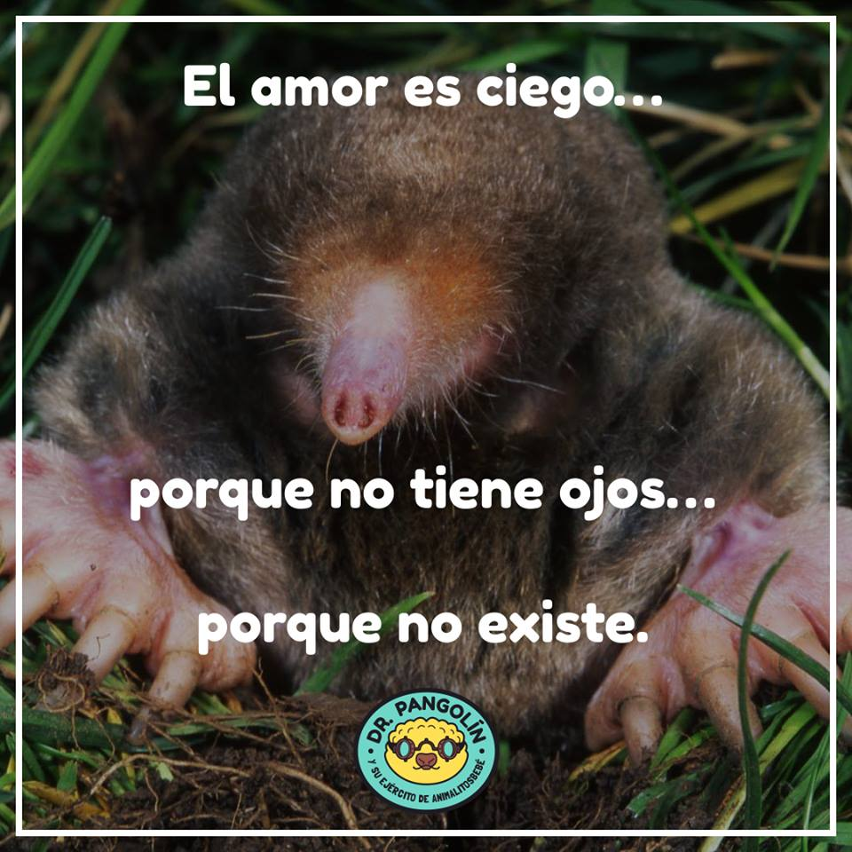 mexico-animales-mexicanos-peligro-extincion-dr-pangolin-videos