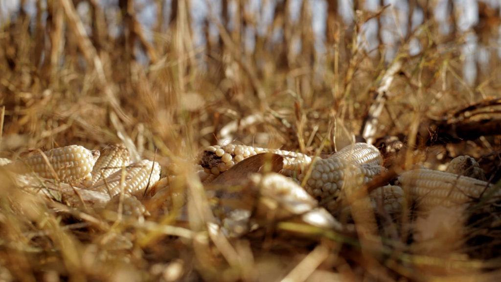 mexico-campesinos-campo-agricultura-maiz-nativo