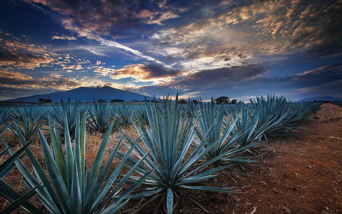 tequila-mexico-destinos-cultura-que-hacer-festivales-gastronomia-jose-cuervo