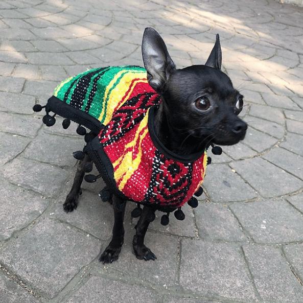mexico-artesanias-accesorios-perros-mascotas-jorongos-guaguarongos