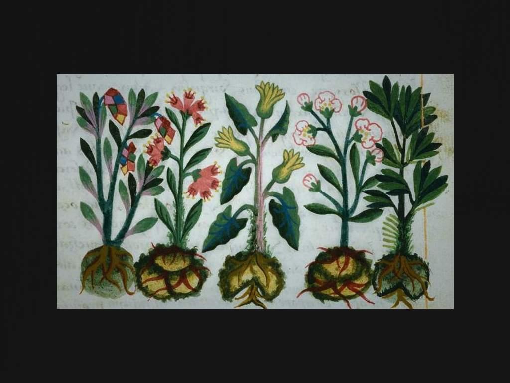 mexico-pais-mas-plantas-medicinales-mundo-usos-beneficios-historia