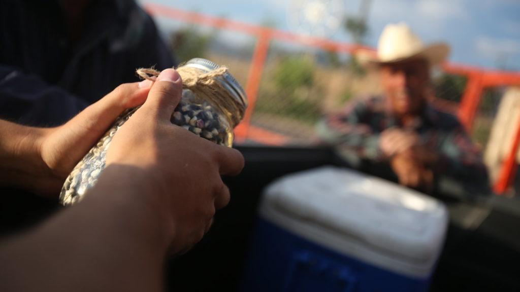 superalimentos-mexicanos-alimentos-tradicionales-pinole-maiz