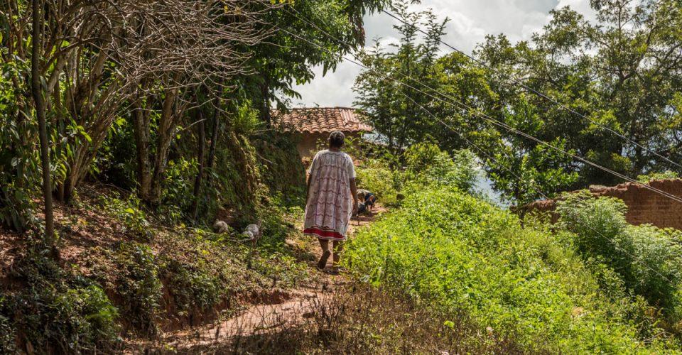 mexico-politicas-campesinos-campo-agrarias-alimentos-transgenicos-organicos