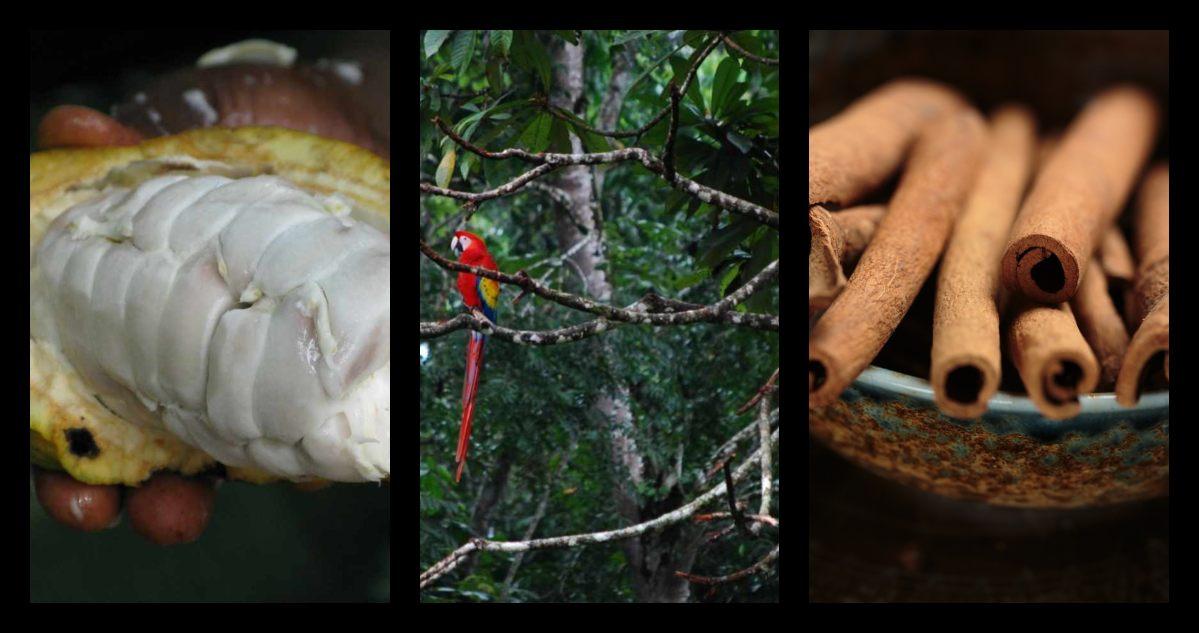 selvas-mexicanas-festival-productos-productores-cacao-vainilla-cafe