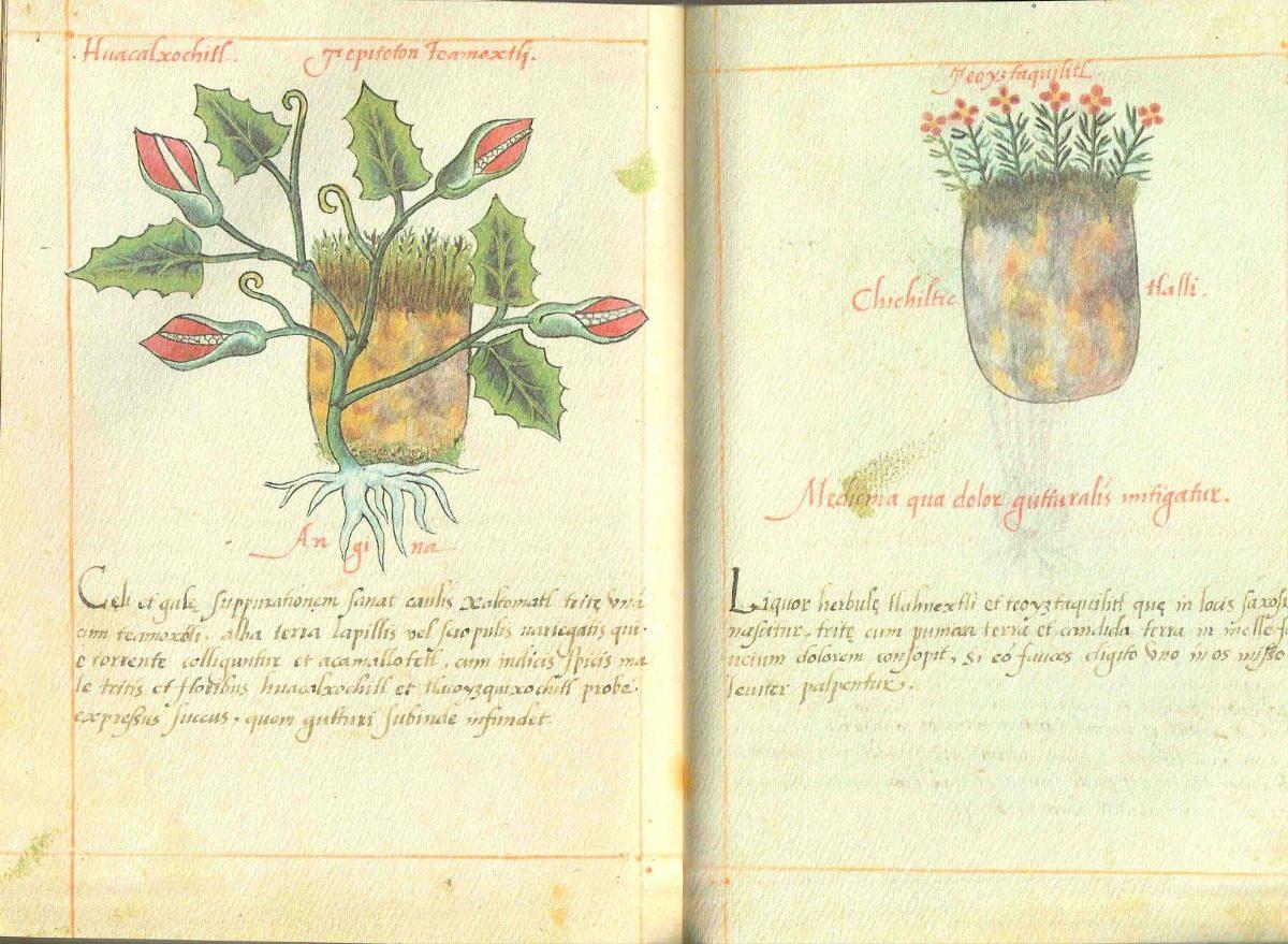 plantas-medicinales-mexicanas-propiedades-cura-enfermedades