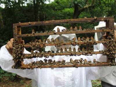 ruta-de-la-miel-tlaxcala-ecoturismo-viajes-abejas-apicultura