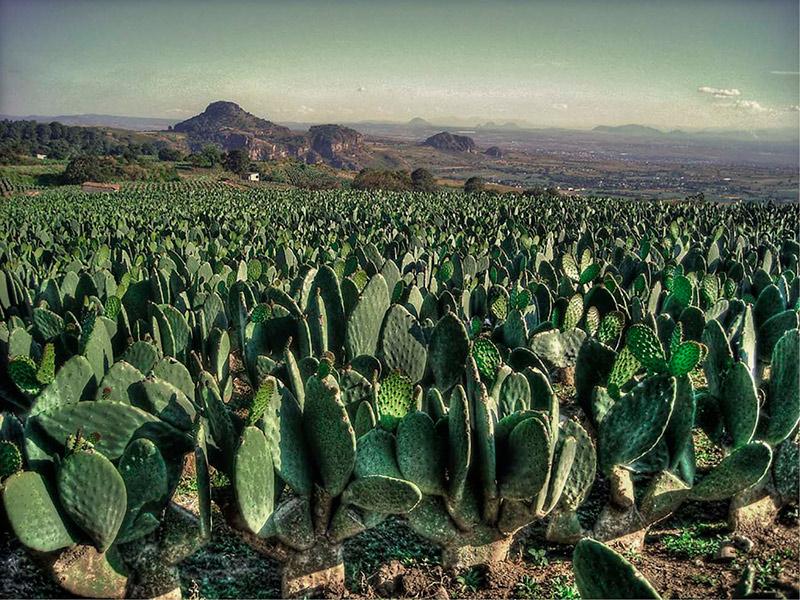 alimentos-del-futuro-mexico