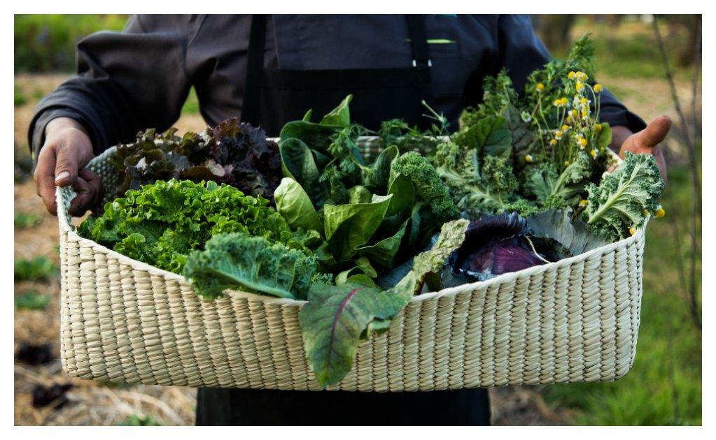 mexico-canasta-organica-domicilio-chinampas-agricultura-mercado-organicos